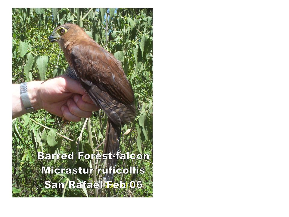 Avifaunal diversity in the peripheral areas of the ...