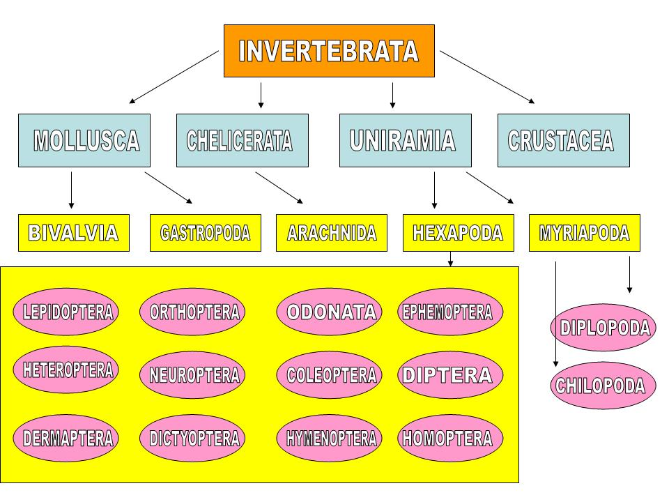 Invertebrate Hierarchical Taxonomy On Fauna Paraguay Website