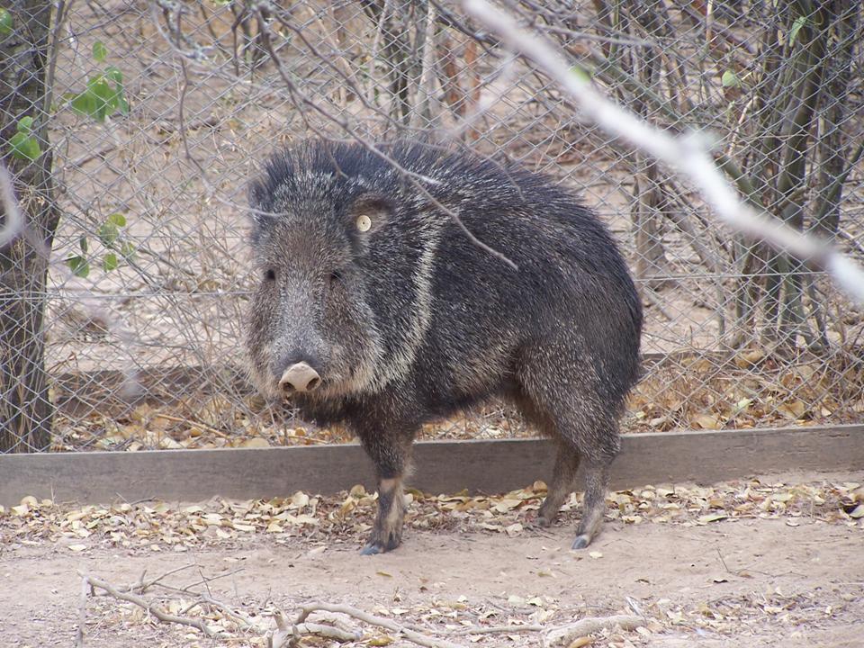 10 Animals That Live In Paraguay - WorldAtlas