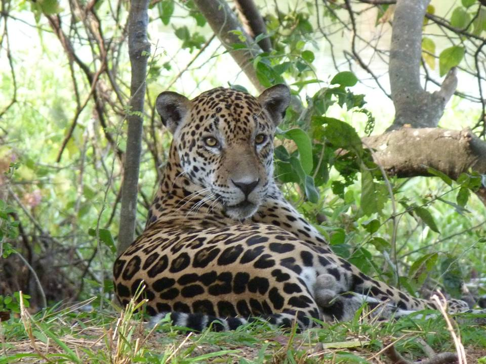Great Chaco - Wildlife Paraguay